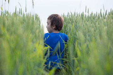 boy in the grain, field corn