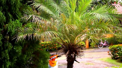 Rainy season in the tropical region. Palm tree in the wind.