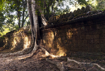 Tree and wall, Cambodia