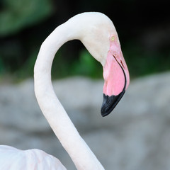 Close up flamingo 's neck.