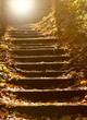 canvas print picture - Steintreppe im mystischen Wald