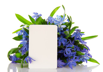 Bouquet of scilla and the empty card
