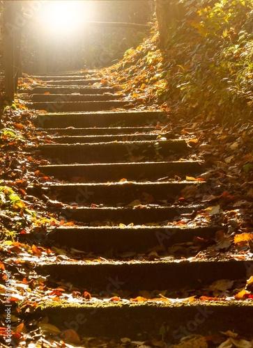 canvas print picture Steintreppe im mystischen Wald