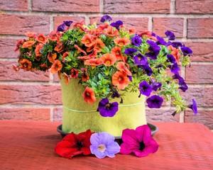 Zauberglöckchen und Blüten Petunie