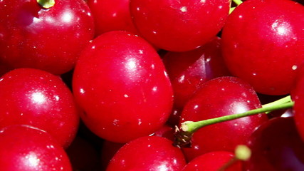 Freshly picked sour cherries closeup