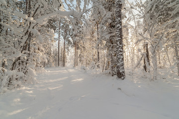 Winter wood road.
