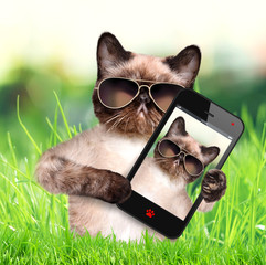 Cat taking a selfie with a smartphone