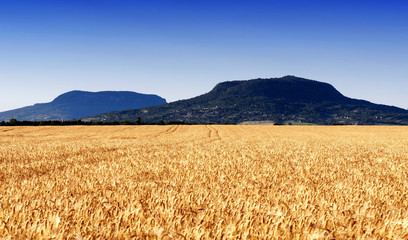 Wheat field at extinct volcanoes, Hungary