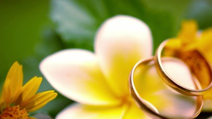 Close up wedding gold rings on Thai flowers frangipani