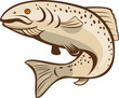 Rainbow Trout Jumping Cartoon