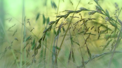 green leaves and grasses background