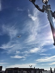 чайка летит над главной площадью в Венеции