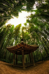 A small pavilion in a bamboo forest