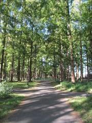 木々のなかの遊歩道