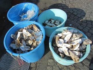 貝とバケツ