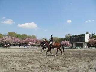 馬事公苑の乗馬