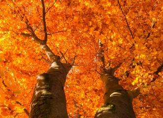 Herbst Baumkrone