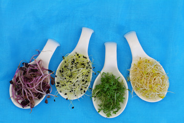 Alfalfa, leek sprouts and watercress on porcelain spoons