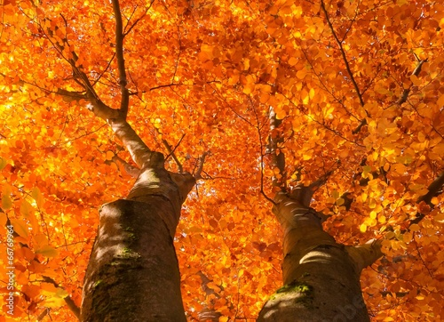 canvas print picture Herbst Baumkrone