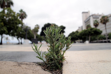 Plant Growing on the Road