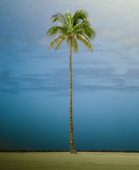 Retro Style Tall Single Palm Tree