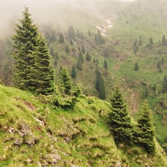 Tannenbäume auf Berg