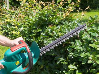 Gartenarbeit - Hecke schneiden - Heckenschere