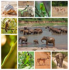 Animal in jungles of Sri Lanka