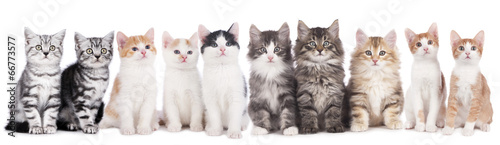 Katzengruppe - 66773577