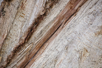 close-up of a detailed abstract wooden background