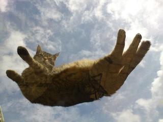 Katze auf Glasdach