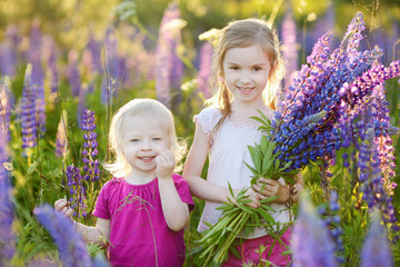 Two little sisters in blooming lupine field