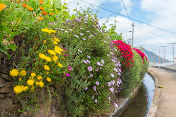 Flowers along a Levada irrigation canal at Madeira