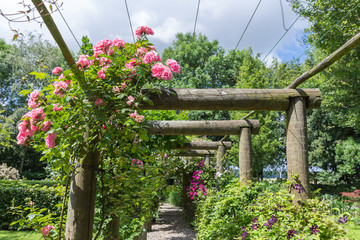 Ornamental garden with pergola and rosa