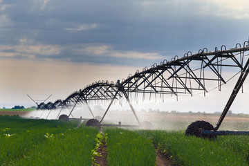 Irrigation of onion field