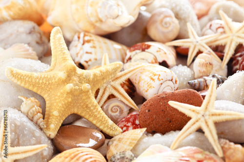Fototapeta Seashells background.
