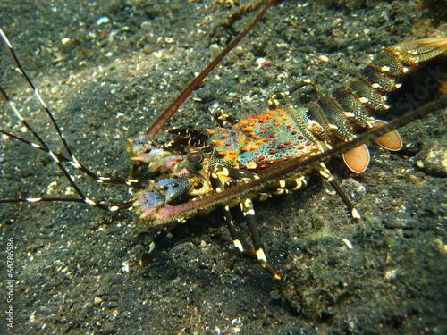 Leinwanddruck Bild Lobster