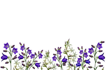Flowers bells isolated on white background