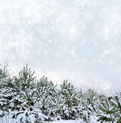 Winter landscape. Background.