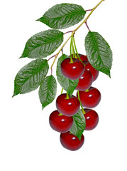 branch of berries cherries with leaves isolated on white backgro