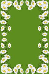 rahmen,floral,blüte,blume,sommerwiese,gänseblümchen