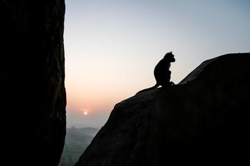 Monkey sitting silhouette at dawn