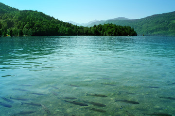 Azure lake / Limpid blue water with fishes