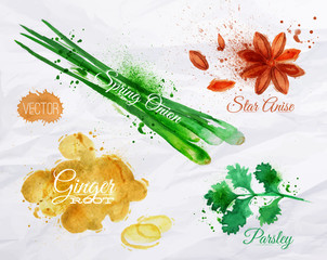 Spices herbs watercolor star anise, parsley, spring onion,