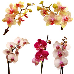 Collection of orchids