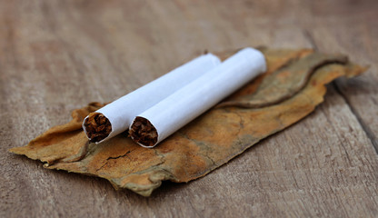 Dried tobacco leaves with cigarette