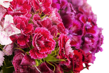 close up turkish carnation bouquet