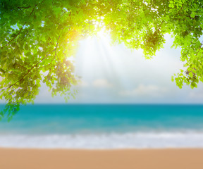 Green leaf and tropical beach