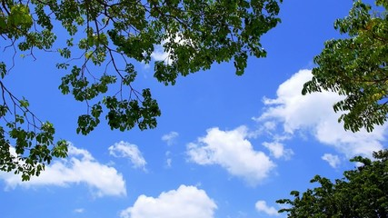 Clouds in Sky through Foliage. Beautiful Skyscape. Speed up.