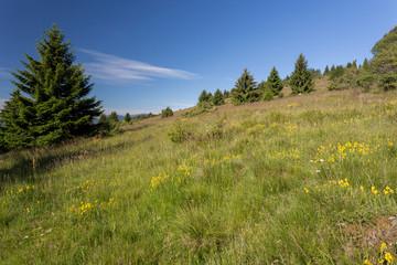 Prairie fleurie en montagne
